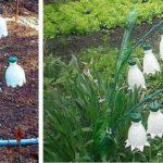 Если живые цветы пока не расцвели...